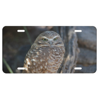 Burrowing Owl License Plate