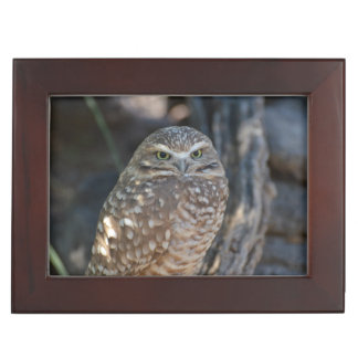 Burrowing Owl Memory Box