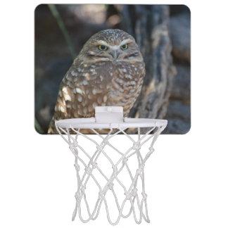 Burrowing Owl Mini Basketball Backboard