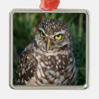 Burrowing Owl  peace and confidence Metal Ornament