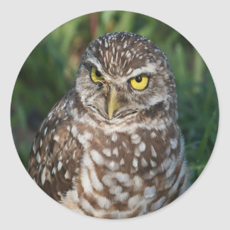 Burrowing Owl  peace and confidence Round Stickers