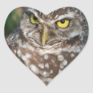 Burrowing Owl  peace and confidence Heart Stickers
