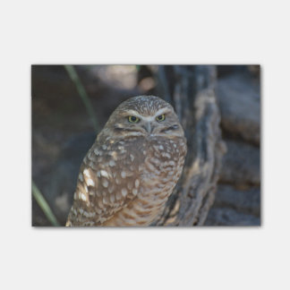 Burrowing Owl Post-it Notes