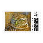 Burrowing Owl Postage