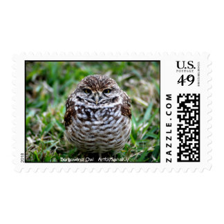 Burrowing Owl. Postage Stamps