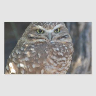 Burrowing Owl Rectangular Sticker