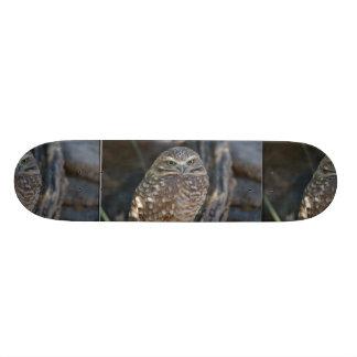 Burrowing Owl Skateboard Deck