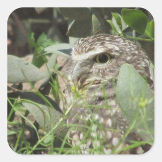 Burrowing Owl Square Sticker