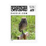 Burrowing Owl stamp