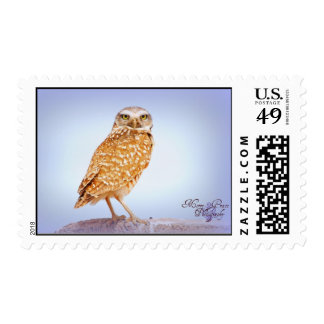 Burrowing Owl Stamps