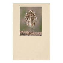 Burrowing Owl stationary paper