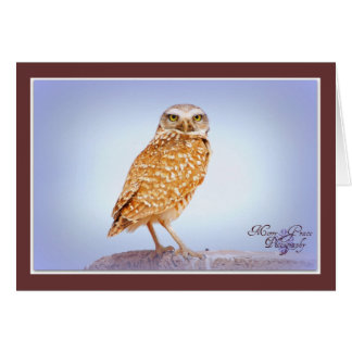 Burrowing Owl Stationery Note Card