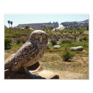 Burrowing Owl Statue Photo Print