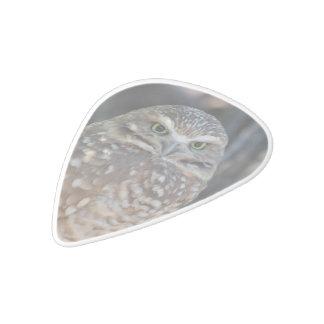 Burrowing Owl White Delrin Guitar Pick