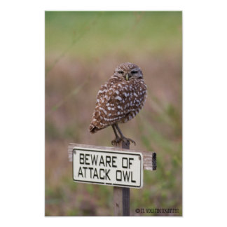 Burrowing Owls 05-09 011 Poster