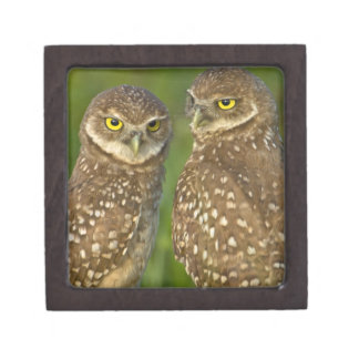 Burrowing owls are a popular site on Marco 2 Jewelry Box