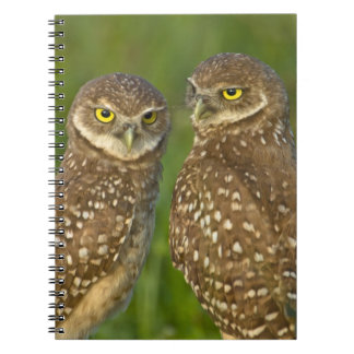 Burrowing owls are a popular site on Marco 2 Spiral Notebooks