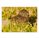 Burrowing owls are a popular site on Marco 3 Card