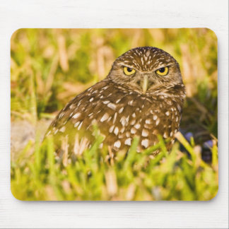 Burrowing owls are a popular site on Marco 3 Mouse Pad