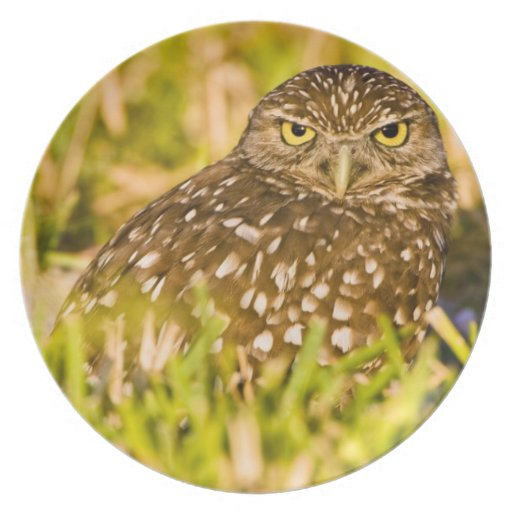 Burrowing owls are a popular site on Marco 3 Plate