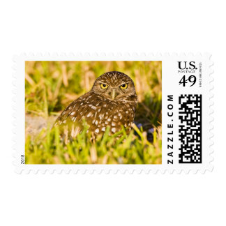 Burrowing owls are a popular site on Marco 3 Stamp
