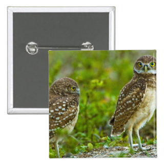 Burrowing owls are a popular site on Marco 4 Button