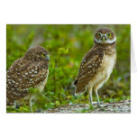 Burrowing owls are a popular site on Marco 4 Card