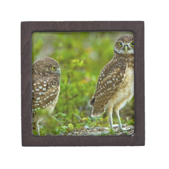 Burrowing owls are a popular site on Marco 4 Jewelry Box