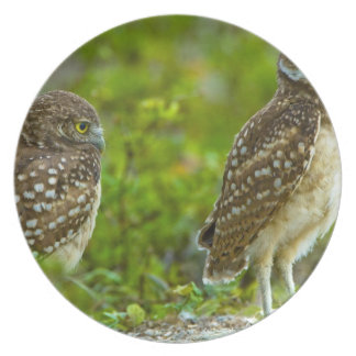 Burrowing owls are a popular site on Marco 4 Melamine Plate