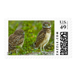Burrowing owls are a popular site on Marco 4 Postage