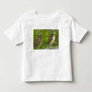 Burrowing owls are a popular site on Marco 4 Toddler T-shirt