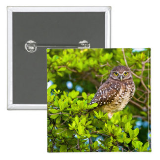 Burrowing owls are a popular site on Marco 2 Inch Square Button