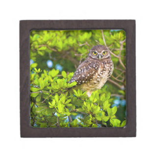 Burrowing owls are a popular site on Marco Gift Box