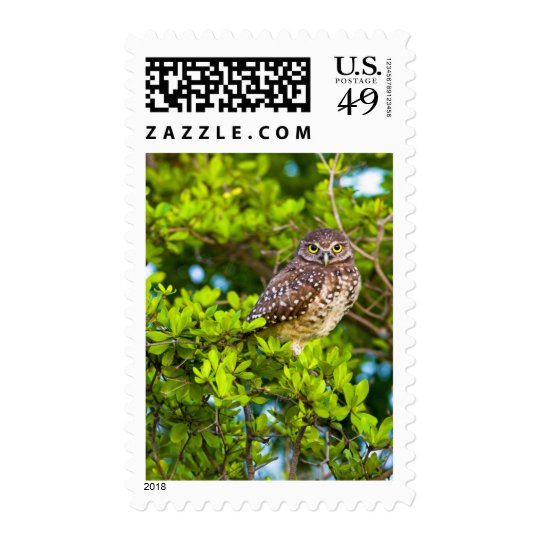 Burrowing owls are a popular site on Marco Postage
