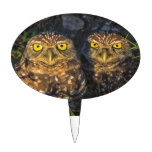 Burrowing Owls Cuddled in their Burrow Cake Picks