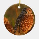 burrowing owls ornaments