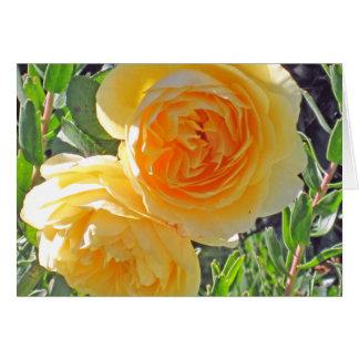 bursting yellow rose - BLANK CARD