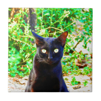 Buscándole negro salvaje animal del gato perdido azulejos cerámicos