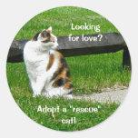 """¿Buscar amor? ¡Adopte un gato del """"rescate""""! Pegat"""