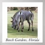 Busch Gardens, Florida Print