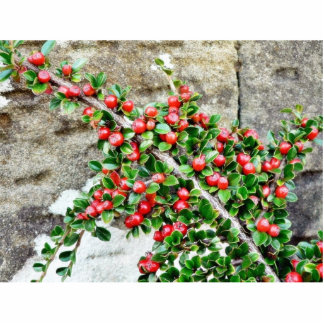 Bush Branch With Red Berries Photo Sculptures