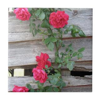 Bush color de rosa que sube azulejo cuadrado pequeño