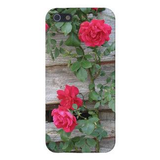 Bush color de rosa que sube iPhone 5 coberturas