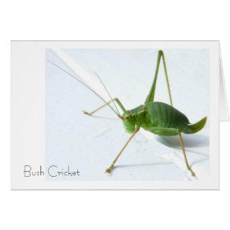 Bush Cricket Greeting Card