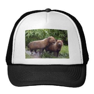 bush-dog-b-1 trucker hat