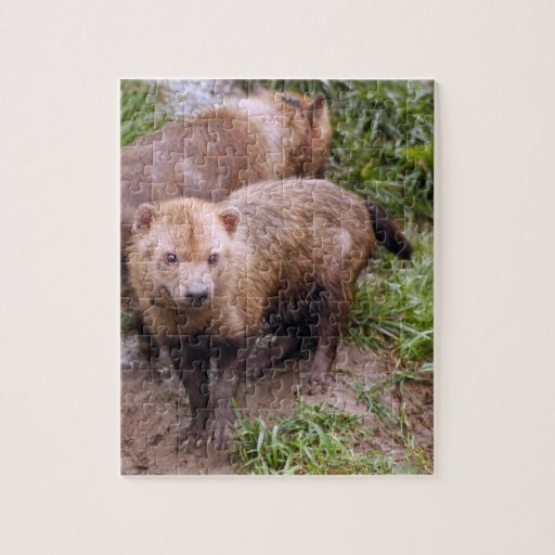 bush-dog-b-2 puzzles con fotos