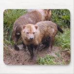 bush-dog-b-2 tapete de raton
