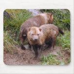 bush-dog-b-2 tapetes de ratones