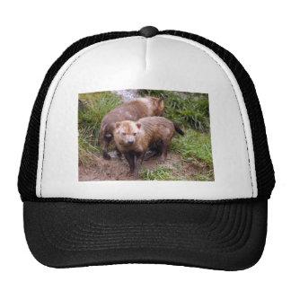 bush-dog-b-2 trucker hat