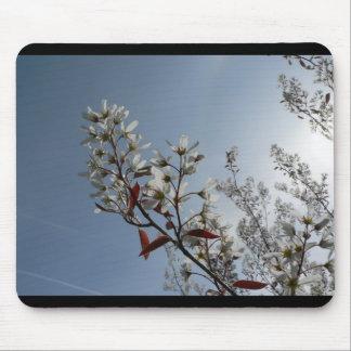 Bush floreciente blanco el Sun Tapetes De Raton